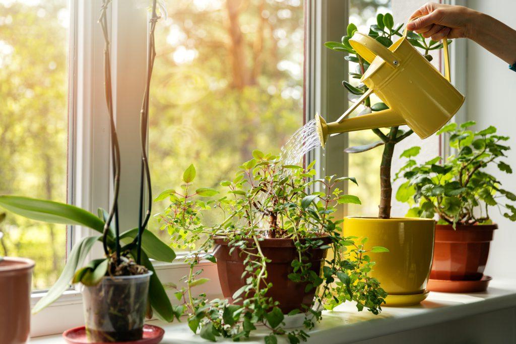 Zimmerpflanzen für ein gesünderes und besseres Leben Woonboulevard Heerlen